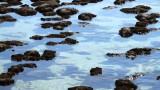 Sztromatolitok (Shark-öböl, Ausztrália)