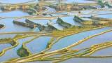 Rizsföldek Kínában