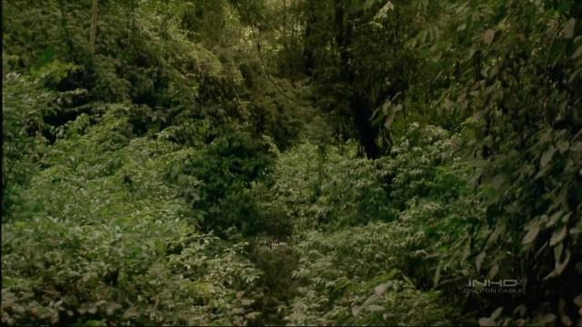 Trópusi esőerdő 1.