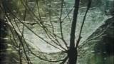 Élet a Földön – első erdőségek