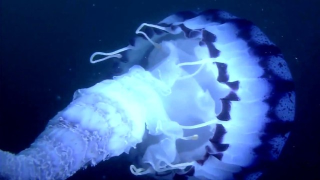 Mélytenger élővilága