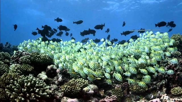 Korallgát